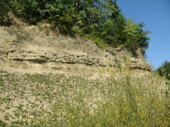 Blick auf einen gelblich braunen Gesteinshang, eingerahmt von Pflanzenwuchs unten sowie Buschwerk und Bäumen oben.