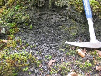Nahaufnahme von dunkelgrauem bis schwarzem, feinscherbigem Gestein mit angrenzendem Pflanzenbewuchs. Ein Hammer rechts im Bild zeigt die Größe an.
