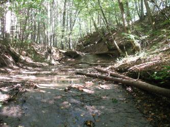 Das Bild zeigt die bewaldeten Ufer eines abgestuften, auf den Betrachter zufließenden Baches. Das rechte Bachufer hat eine höhere und steilere Böschung als das linke Ufer.