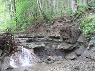 Blick auf einen steilen, nach recht aufsteigenden Waldhang mit verkippt stehenden Bäumen. Im Vordergrund schließt sich eine flache, halbrunde Felsentreppe an, die links von einem kleinen Wasserfall überwunden wird.