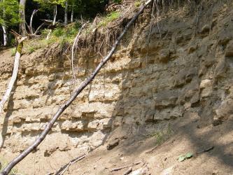 Das Bild zeigt eine hellgraubraune Gesteinswand unterhalb eines Waldhanges. Das Gestein ist waagrecht gebankt und ähnelt Zahnreihen. Links und mittig lehnen umgestürzte Bäume am Aufschluss.