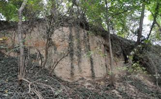 Das Bild zeigt eine hellbraune Lösswand mit rötlichen Flecken. Die Wand ist von allen Seiten stark zugewachsen, mit Bäumen, Hängepflanzen und Sträuchern.