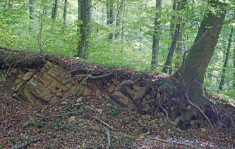 Blick auf freiliegendes Gesteins- und Bodenmaterial an einem nach rechts abfallenden Waldhang. Links und mittig ist schräg geschichtetes, blockhaftes Gestein erkennbar, rechts Stamm und Wurzelwerk eines schräg stehenden Baumes.