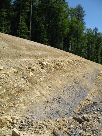 Das Bild zeigt einen Böschungsaufschluss. Im unteren Drittel des Aufschlusses ist das Gestein violett, darüber schmutzig gelb. Über dem Aufschluss wachsen Nadelbäume.