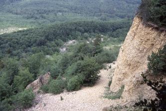 Von oben blickt man auf eine rechts sichtbare, gelblich graue Gesteinswand, zu deren Fuß sich Bäume, aber auch abgerutschte Geröllhaufen ausbreiten. Noch weiter unten sowie im Hintergrund dehnt sich dichter Wald aus.