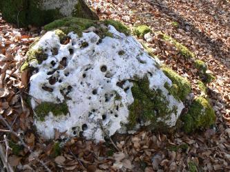 Nahaufnahme eines auf einem Laubteppich liegenden, mit Moos bewachsenen löchrigen Felsens. Seiner weißlich grauen Farbe wegen könnte man glauben, er sei mit Schnee bedeckt.
