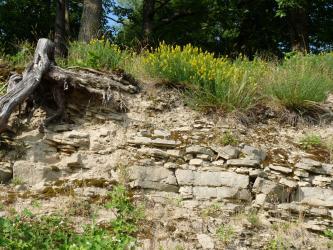Kleiner Teil einer Böschung mit waagrecht liegendem, hellem Gestein und Erdreich. Die Kuppe der Böschung ist bewachsen. Links steht eine abgesägte Baumwurzel hervor. Im Hintergrund ist schattiger Wald erkennbar.