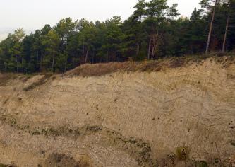 Das Bild zeigt die fast senkrechte Abbruchkante eines bewaldeten Hanges. Das rötlich braune Boden- und Gesteinsmaterial hat eine wellenförmige Ausprägung.