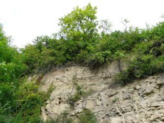 Nahaufnahme einer hellbraunen, im rechten unteren Teil mit Gestein vermischten Erdschicht, deren Kuppe mit dicht stehendem Buschwerk bewachsen ist.