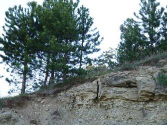 Das Bild zeigt die Abbruchkante eines von links nach rechts ansteigenden, mit Kiefern bewachsenen Hanges. In das graubraune Bodenmaterial mischen sich rechts gelblich braune Gesteinsbrocken.