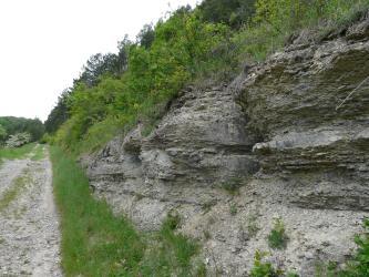Rechts eines Weges erhebt sich ein dicht mit Gras und Buschwerk bewachsener, steiniger Hang. Das längs gefurchte, teils abgerundete Gestein hat eine graugelbe Farbe. Rechts unten liegt Schutt.
