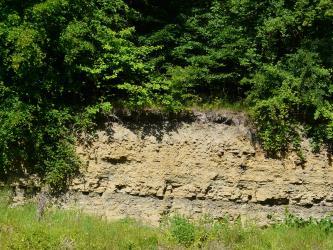 Das Bild zeigt eine dicht bewachsene, an der Sohle grasige Wand eines Steinbruches. Auf eine dünne Schicht graugelben Gesteins folgt dabei höher liegendes, gelblich braunes Material.