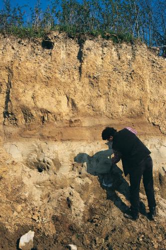 Das Bild zeigt ein etwa vier Meter hohes Bodenprofil. Die Kuppe des gelblich braunen Profils ist bewachsen. In der Mitte verläuft ein waagrechter, rötlicher Streifen. Ein Mann in dunkler Kleidung glättet unten rechts das Profil mit einer Schaufel.