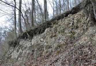 Das Bild zeigt einen nach links ansteigenden, aus grauem Gestein bestehenden Hang. Über dem Gestein, auf einer durchwuzelten Bodenschicht, stehen schlanke Bäume. Im Vordergrund rechts sieht man Gestrüpp und totes Laub.