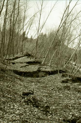 Ein dicht belaubter Waldboden ist von mehreren, horizontal verlaufenden Spalten duchzogen. Rechts sind die Bäume stark geneigt.