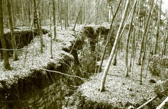 Zu sehen ist ein Waldstück, durch das links und mittig zwei lange und tiefe Risse gehen. Durch den Riss in der Mitte ist der Boden rechts davon abgesackt. Die Oberfläche der Böden unter meist schlanken, dünnen Bäumen ist von Schnee bedeckt.