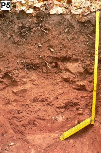 Das Foto zeigt ein aufgegrabenes Bodenprofil unter einer Laubdecke. Das rötlich braune Profil ist etwa 80 cm tief.