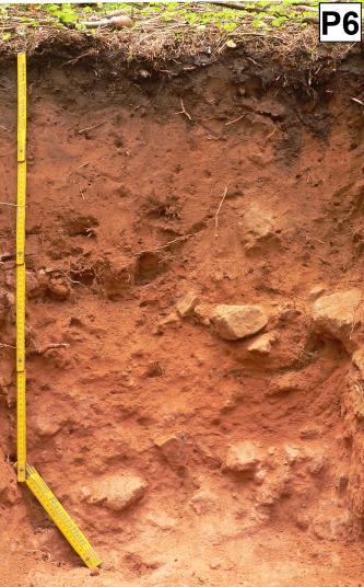 Das Bild zeigt ein aufgegrabenes Bodenprofil unter Wald. Das rötlich braune, im unteren Teil Steine führende Profil ist 1 m tief.