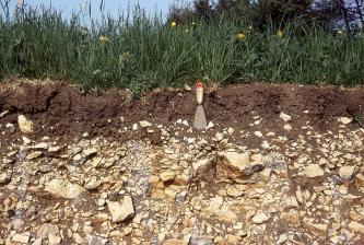 Das Bild zeigt die offene Seite eines sehr steinigen, gelblich braunen Bodens. Darüber liegt eine spachteltiefe Schicht steinfreien, dunkelbraunen Bodens sowie hochstehendes Grünland.