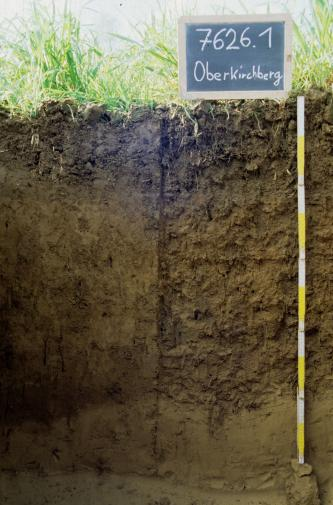 Musterprofil eines dunkelbraunen, recht homogenen Bodens unter einer Wiese. Rechts befindet sich ein Maßstab und darüber eine Kreidetafel mit Beschriftung.