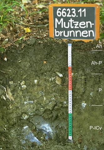 Das Foto zeigt ein Bodenprofil unter Wald. Es handelt sich um ein Musterprofil des LGRB. Das vier Horizonte umfassende Bodenprofil ist nur etwa 40 cm tief.