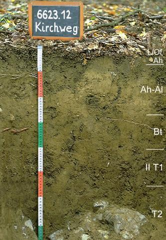 Das Foto zeigt ein Bodenprofil unter Wald. Es handelt sich um ein Musterprofil des LGRB. Das fünf Horizonte umfassende Bodenprofil ist 75 cm tief.