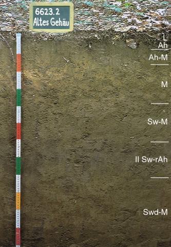 Das Foto zeigt ein Bodenprofil unter Wald. Es handelt sich um ein Musterprofil des LGRB. Das sechs Horizonte umfassende und sehr dunkle Bodenprofil ist über 1 m tief.