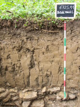 Das Foto zeigt ein Bodenprofil unter Wald. Es handelt sich um ein Musterprofil des LGRB. Das Bodenprofil ist über 1 m tief und am unteren Ende steinig.