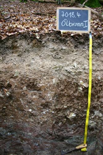 Das Foto zeigt ein Bodenprofil unter Wald. Das Bodenprofil ist 1 m tief. Rechts oben befindet sich ein Schild mit der Beschreibung des Profils.