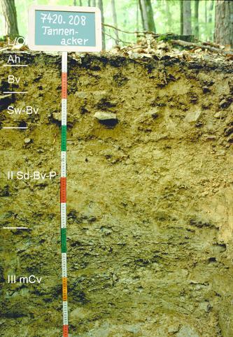 Das Bild zeigt ein Bodenprofil unter Wald. Es handelt sich um ein Musterprofil des LGRB. Das in sechs Horizonte gegliederte Profil ist 1,20 m tief. Eine Tafel links oben nennt Nummer und Namen des Profils.