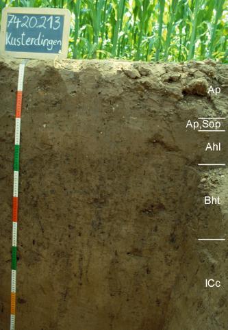 Das Bild zeigt ein Bodenprofil unter Maispflanzen. Es handelt sich um ein Musterprofil des LGRB. Das in fünf Horizonte unterteilte Profil ist 1,10 m tief. Eine Tafel links oben gibt Nummer und Name des Profils an.