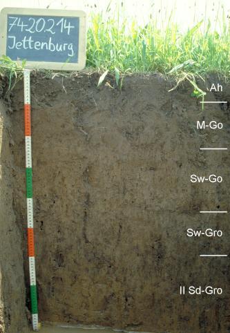 Das Foto zeigt ein Bodenprofil unter Ackerpflanzen. Es handelt sich um ein Musterprofil des LGRB. Das in fünf Horizonte gegliederte Profil ist 90 cm tief. Eine Tafel links oben gibt Nummer und Name des Profils an.
