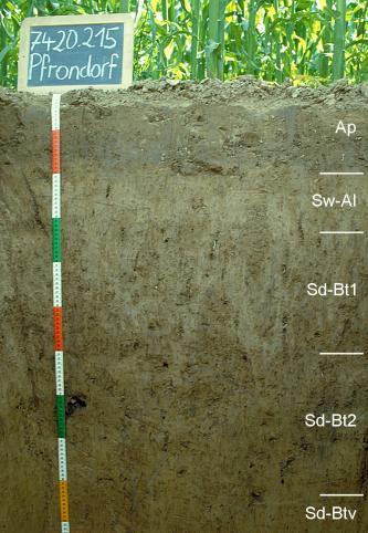 Das Foto zeigt ein Bodenprofil unter Acker. Es handelt sich um ein Musterprofil des LGRB. Das in fünf Horizonte gegliederte Profil ist über 1 m tief. Eine Tafel links oben gibt Nummer und Name des Profils an.