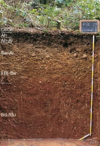 Bodenprofil unter Waldboden. In der oberen Hälfte ist der Boden hellbraun mit kleinen Gesteinsblöcken, nach unten wird er dunkler. Am linken Bildrand sind die einzelnen Bodenhorizonte eingezeichnet. Rechts befindet sich ein Maßstab und ein Schild.