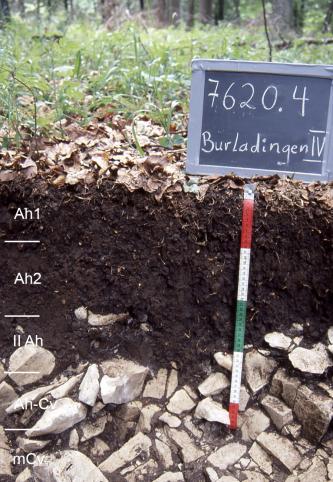 Das Foto zeigt ein Bodenprofil unter Wald. Es handelt sich um ein Musterprofil des LGRB. Das fünf Horizonte umfassende, unten sehr steinige Profil ist 50 cm tief.