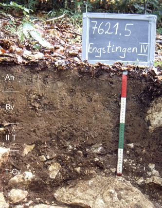 Das Foto zeigt ein Bodenprofil unter Wald. Es handelt sich um ein Musterprofil des LGRB. Das vier Horizonte umfassende Profil ist 50 cm tief.