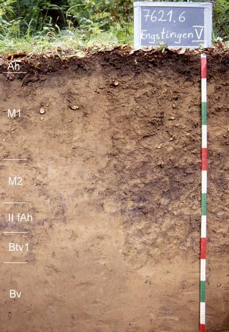 Das Foto zeigt ein Bodenprofil unter Wald. Es handelt sich um ein Musterprofil des LGRB. Das sechs Horizonte umfassende Profil ist über 1,20 m tief.
