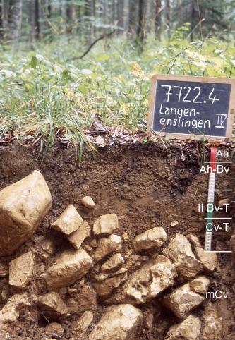 Das Foto zeigt ein Bodenprofil unter Wald. Es handelt sich um ein Musterprofil des LGRB. Das fünf Horizonte umfassende, sehr steinige Profil ist etwa 60 cm tief.