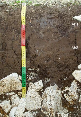 Das Foto zeigt ein Bodenprofil unter Wald. Es handelt sich um ein Musterprofil des LGRB. Das drei Horizonte umfassende, unten steinige Profil ist etwa 50 cm tief.