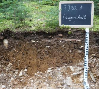 Das Foto zeigt ein Bodenprofil unter Wald. Es handelt sich um ein Musterprofil des LGRB. Das Profil ist etwa 50 cm tief.