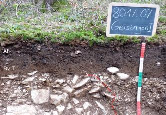Das Foto zeigt ein Bodenprofil unter Wald. Es handelt sich um ein Musterprofil des LGRB. Das unten steinige Profil ist über 50 cm tief.