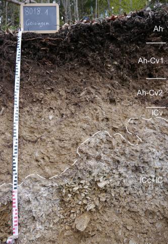 Das Foto zeigt ein Bodenprofil unter Wald. Es handelt sich um ein Musterprofil des LGRB. Das fünf Horizonte umfassende Profil ist über 1,20 m tief.