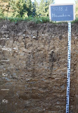Das Foto zeigt ein Bodenprofil unter Acker. Es handelt sich um ein Musterprofil des LGRB. Das Bodenprofil ist 1 m tief.