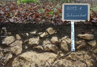 Das Foto zeigt ein Bodenprofil unter Wald. Es handelt sich um ein Musterprofil des LGRB. Das sehr steinige Profil ist nur etwa 40 cm tief.