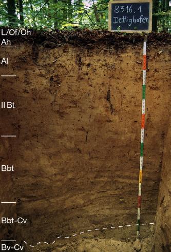 Das Foto zeigt ein Bodenprofil unter Wald. Es handelt sich um ein Musterprofil des LGRB. Das sechs Horizonte umfassende Profil ist 1,50 m tief.