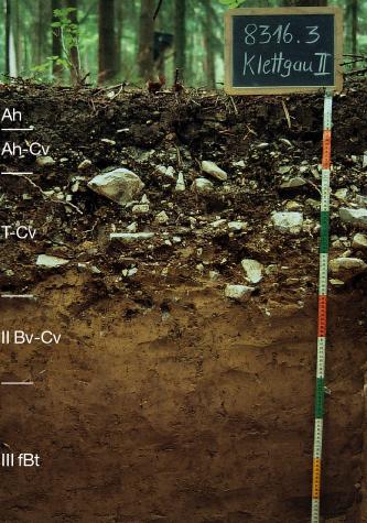 Das Foto zeigt ein Bodenprofil unter Wald. Es handelt sich um ein Musterprofil des LGRB. Das fünf Horizonte umfassende Profil ist über 1 m tief.