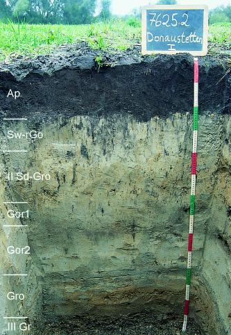 Musterprofil eines Bodens. Der oberste Horizont ist dunkel bis schwarz, darunter befinden sich hellgraue bis beige Horizonte. Links am Bildrand sind die einzelnen Horizonte eingezeichnet, rechts befindet sich ein Maßstab und darüber eine Kreidetafel.