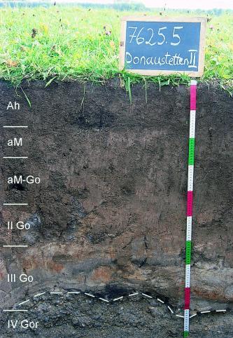 Musterprofil eines Bodens, welcher die oberen zwei Drittel dunkelbraun, dann heller und dann grau ist. Links sind die Horizonte eingezeichnet, rechts befindet sich ein Maßstab und darüber eine Kreidetafel mit Beschriftung. Über dem Profil wächst Wiese.
