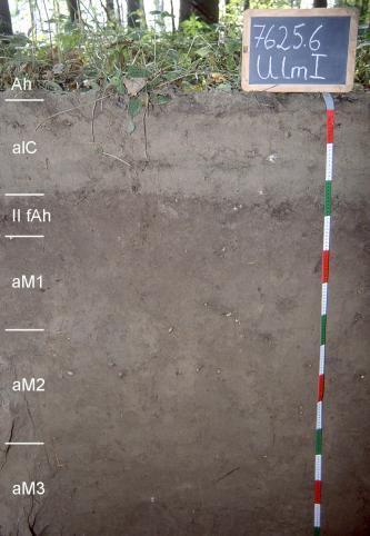 Musterprofil eines hellgrau-braunen Bodens unter Waldboden. Im oberen Viertel ist der Boden etwas heller. Links sind die Horizonte eingezeichnet, rechts ein Maßstab und darüber befindet sich eine Kreidetafel mit Beschriftung.