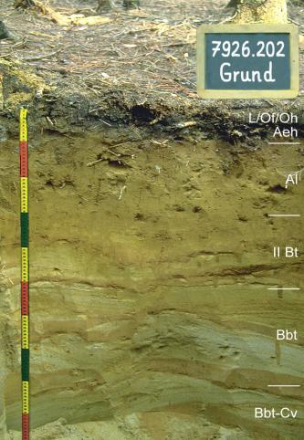 Musterprofil eines feinen, leicht grünlichen Bodens unter Waldboden. Rechts sind die Horizonte eingezeichnet, links befindet sich ein bunter Maßstab. Rechts oben ist eine Kreidetafel mit Beschriftung.